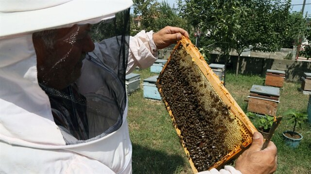 Turkey exports honey to 33 countries in first 6 months