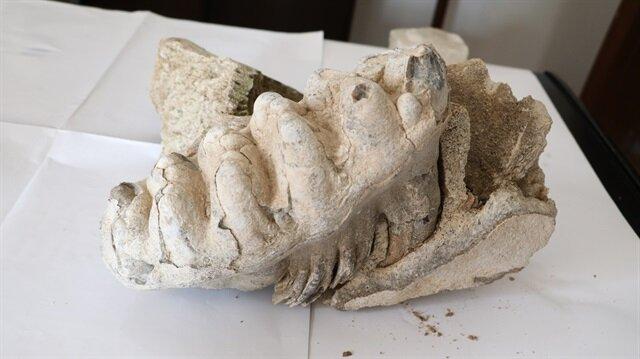 العثور بتركيا على مستحاثة ماموث عمرها 8 ملايين عام