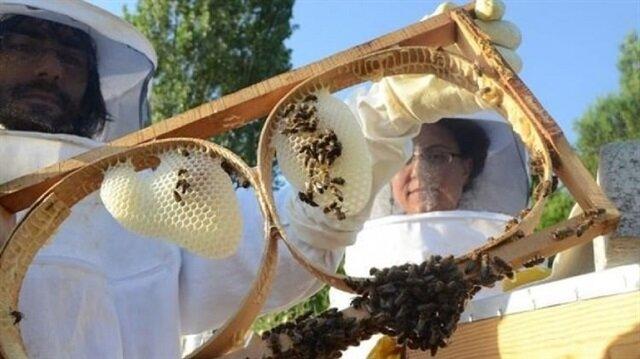 صادرات تركيا من العسل تجوب العالم وتحقق تقدّمًا ملحوظًا