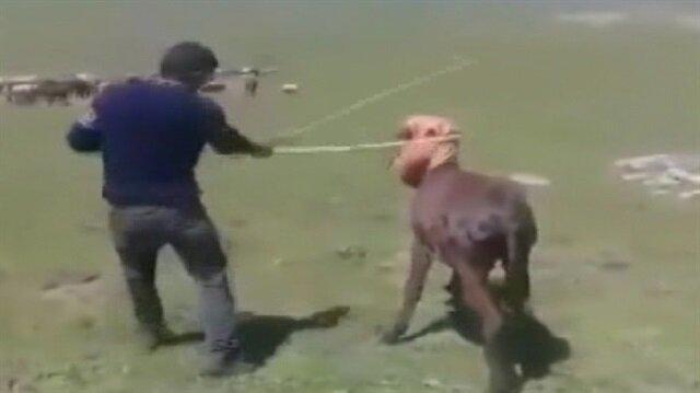 Hayvana işkence eden caninin görüntüleri sosyal medyada büyük tepki çekmişti.