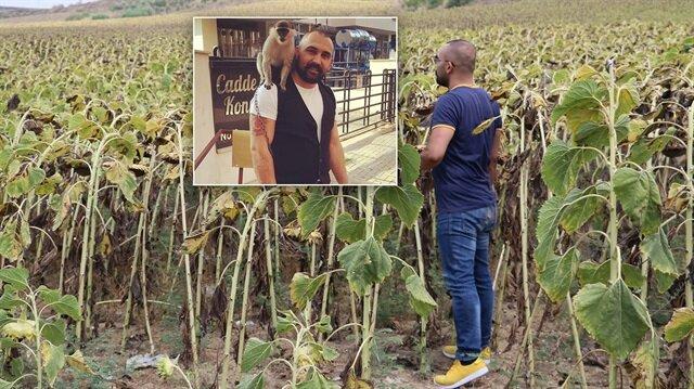 Adana'da kaybolan maymununu arayan adam şehrin dışındaki tarlaları bile kontrol ediyor.