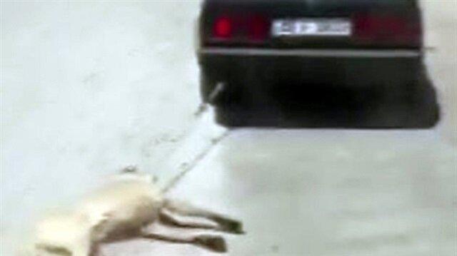 Köpeği metrelerce sürükleyen vicdansız adam gözaltına alındı