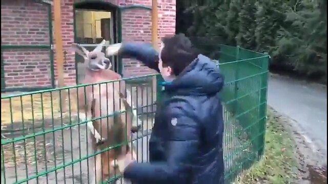 Kangurunun sahte mehdi Tuncer Çiftçi'yle imtihanı kamerada