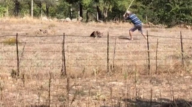 Hayvana şiddet bitmiyor: Kürekle şahin öldüren cani
