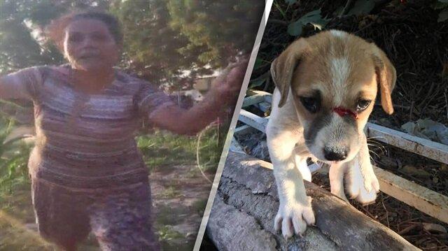 Yavru köpeği odunla döven cani kadın kamerada