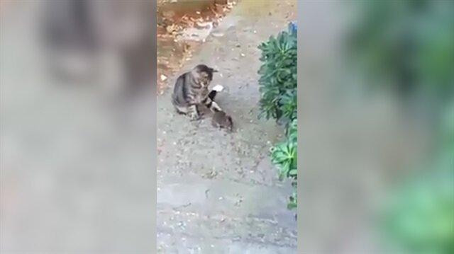 'Tut oğlum' diyerek taktik veren sahibini şaşırtan kedi