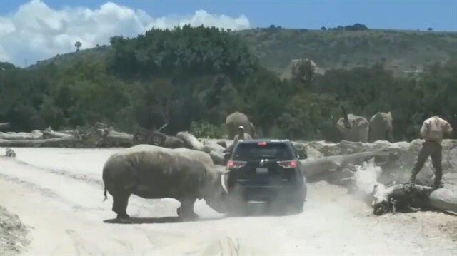 Safari sırasında gergedanın korkutan atağı