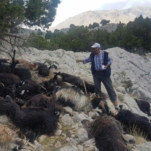 Sürüye yıldırım düştü: 31 keçi telef oldu