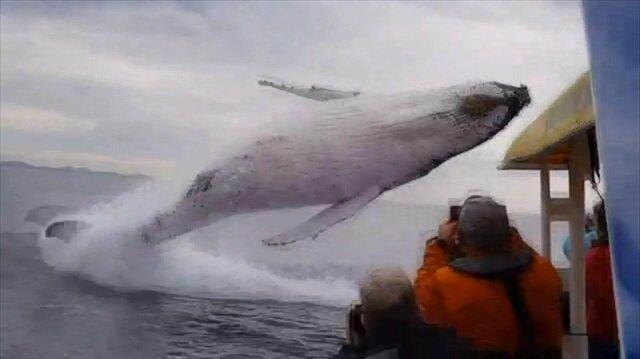 Kambur balinadan ağızları açık bırakan şov