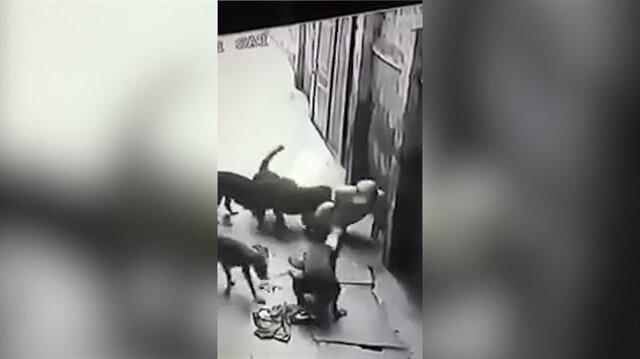 Sokak köpekleri kendilerini seven adamı paramparça etti!