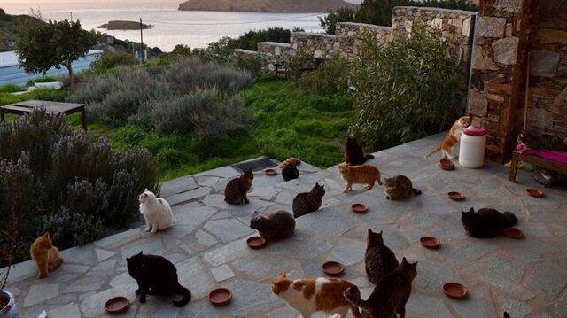 55 kediye bakacak kişi müstakil ve deniz manzaralı bir evde oturacak.