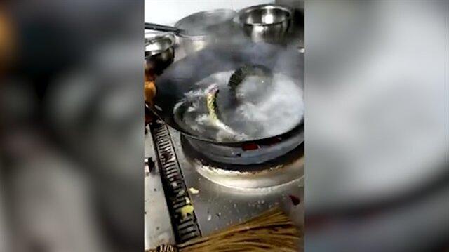 Kafası kesilmiş yılan pişirilirken canlandı