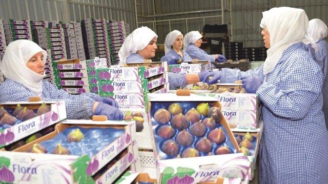 Özellikle Avrupa, Uzak Doğu ülkeleri ve Rusya'ya ihraç edilen 'Bursa siyahı' olarak adlandırılan incirin Çin pazarına girmesi hedefleniyor.