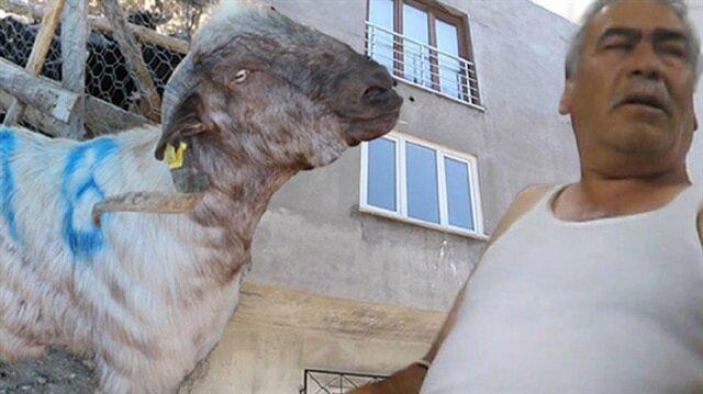 Kafasına 3. kattan keçi düşen adamın kafatasının iki yerinde kırıklar oluştuğu öğrenildi.