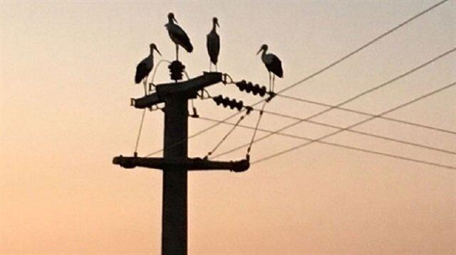 Bursa'da leylek göçü 10 köyü elektriksiz bıraktı
