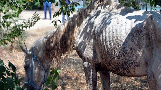 Adana'da bir at gözü oyulmuş ve işkence görmüş halde bulundu.