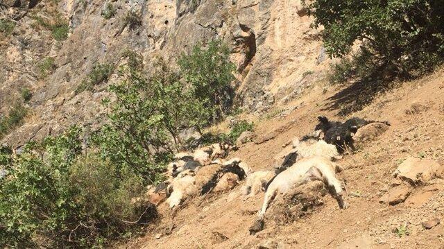 Uçurumdan yuvarlanan koyun ve keçilerin telef olduğu öğrenildi.