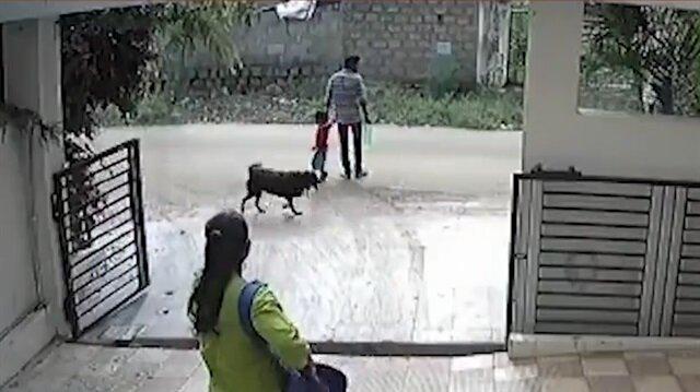 Sokak köpeği küçük çocuğa böyle saldırdı