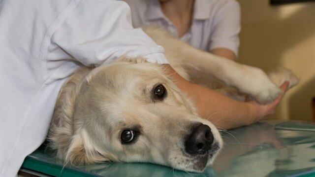 Köpeğinin veteriner ihmali nedeniyle öldüğünü öne süren kadının sosyal medya paylaşımları mahkemeye taşındı.