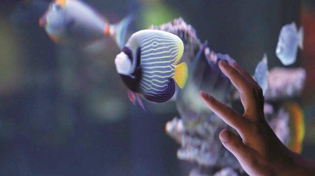 Deniz yasaksa balıkları getiririz
