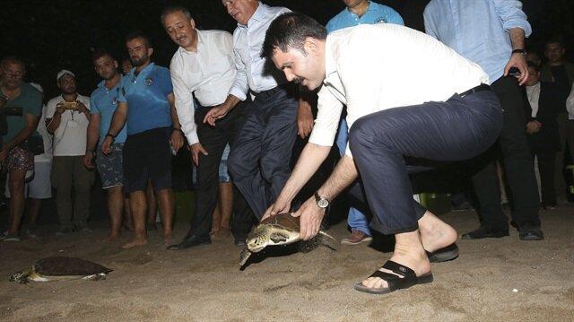 Bakan Kurum, İztuzu Kumsalı'ndaki Deniz Kaplumbağaları Araştırma, Kurtarma ve Rehabilitasyon Merkezini ziyaret etti.