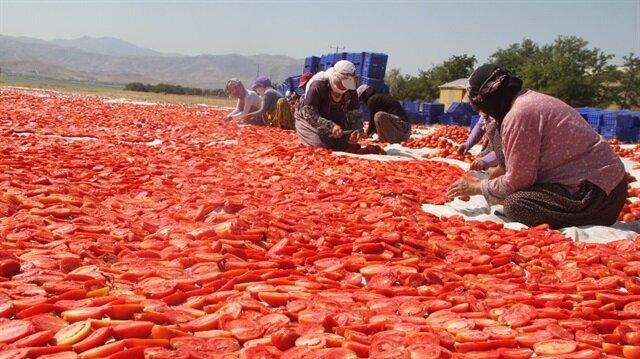 Elazığlı girişimci kuruttuğu tonlarca domatesi dünyaya satılıyor