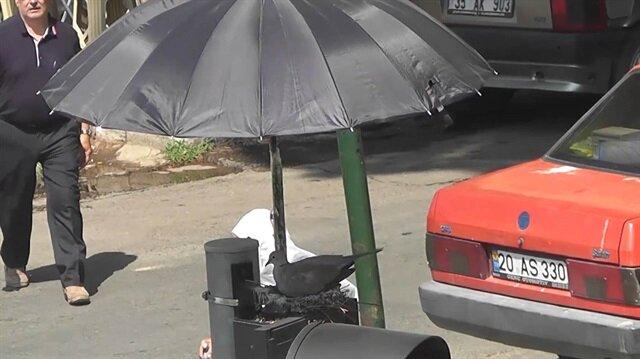 Kumru ve yavrularına şemsiyeli koruma takdir topladı