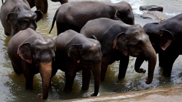 Fil yetimhanesinden isteyen turistler fil evlatlık edinebiliyorlar.