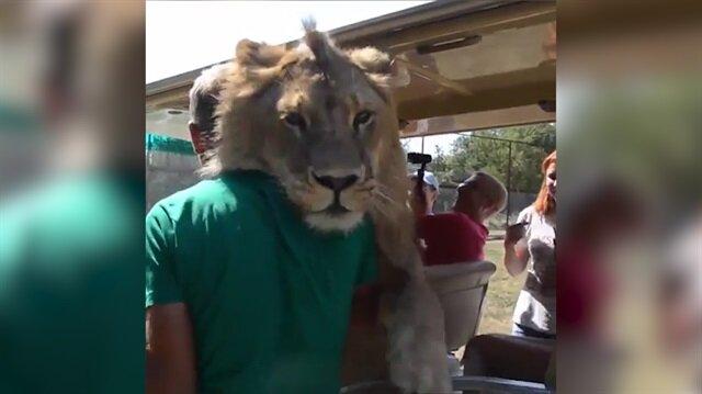 Turistlere sarılan aslan görenleri hayrete düşürdü