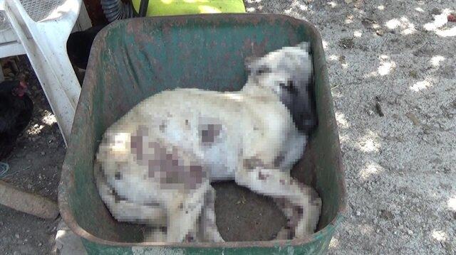 Silahla yaralanan köpek hayatını kaybederken, olayla ilgili soruşturma başlatıldı.