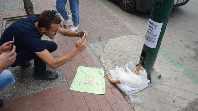 Yapılan sosyal deneyde toplanan paralarla kedilerin mama ve veteriner ücretleri karşılandı.