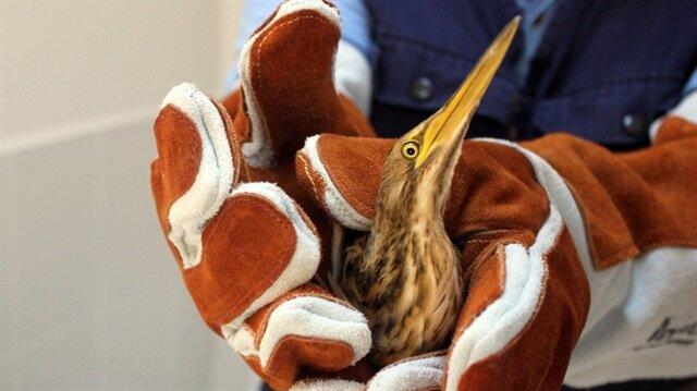 Nesli tükenmekte olan Hint balıkçıl kuşu, Başakşehir'de bir eve girdi.