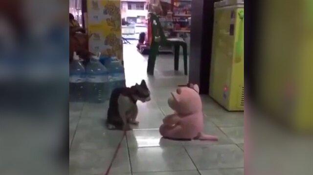 Oyuncak ayıya salto atan çılgın kedi