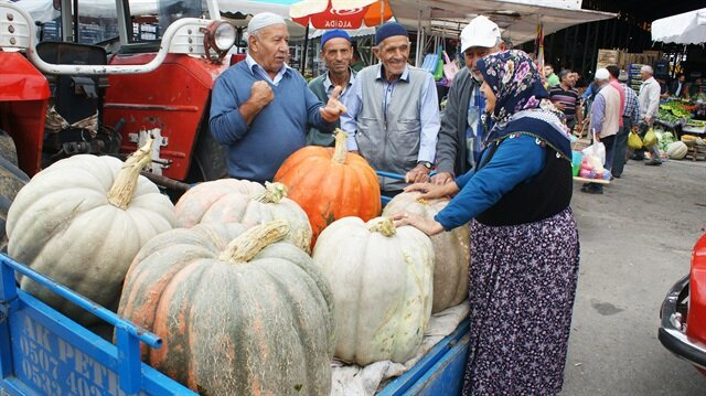 مزارع تركي يعرض للبيع ثمرة قرع تزن 57 كيلوغرام