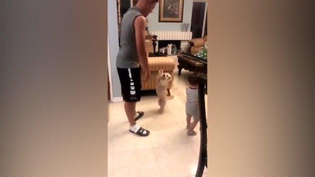 Dünyanın en sevimli kıskançlığını yapan köpek