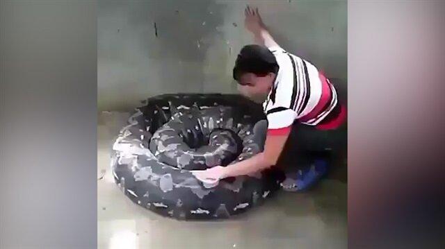 Araba yıkar gibi dev pitonu yıkayan kadın