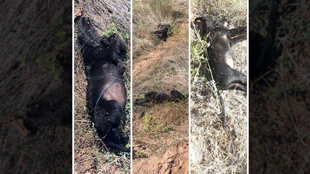 Bolu'da vahşet: Ağaca bağlayıp tüfekle ateş ettiler