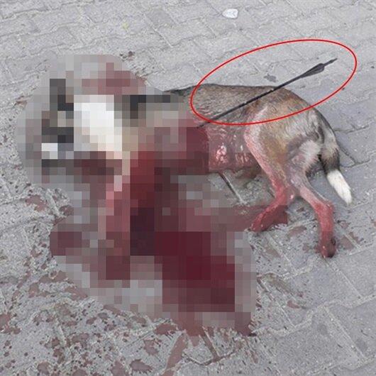 Bu kadarına da pes: Köpeği okla vurup öldürdüler
