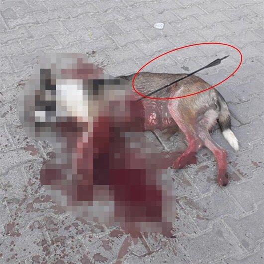 Okla vurulan 'Garip'in katili aranıyor