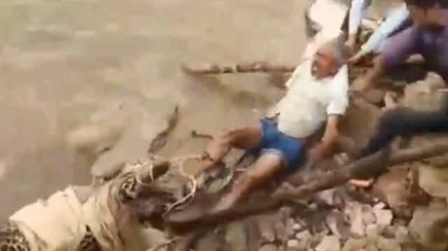 Yaralı leopara yardım etmek isterken canından oluyordu