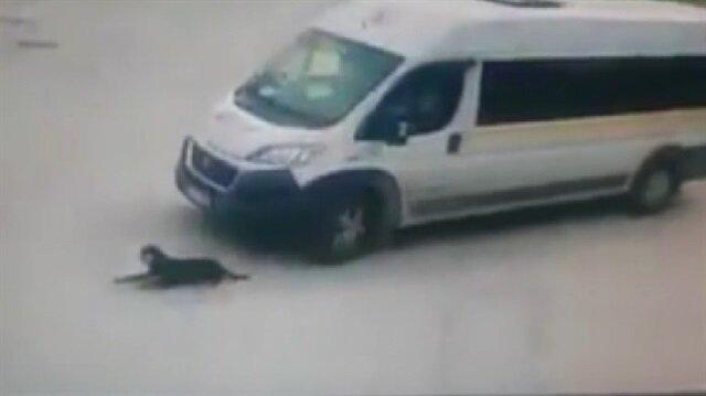 Uyuyan köpeği ezen cani şoför kamerada