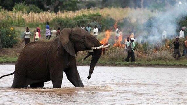 Sri Lanka'da filler 19 kişiyi öldürdü