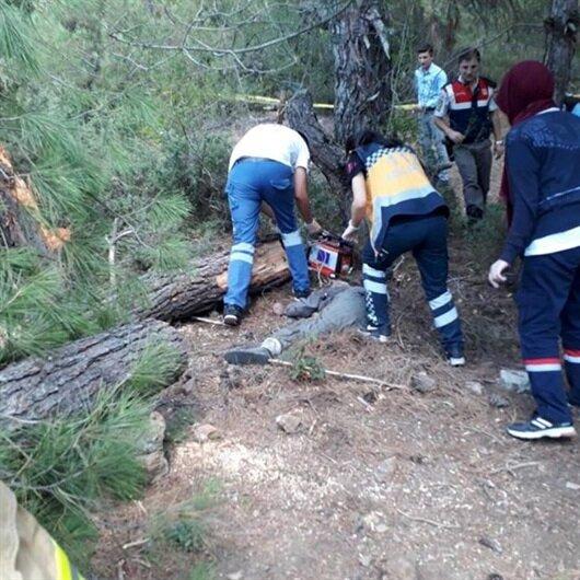 Üzerine ağaç düştü, kopan bacağı bulunamadı