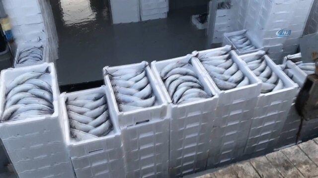 Karadeniz'den palamut fışkırıyor