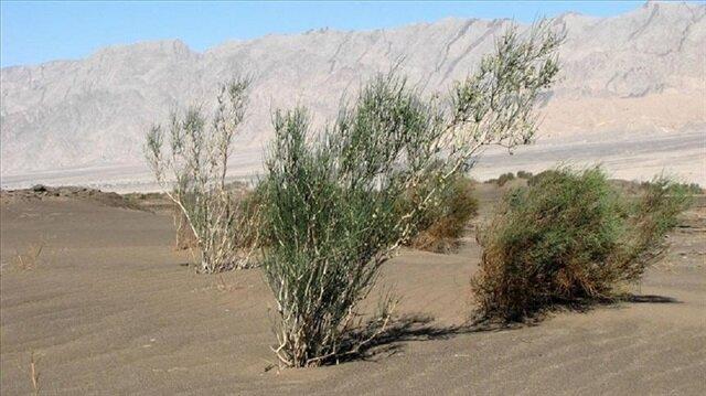 موريتانيا تعرف ظاهرة التصحر بشكل كبير
