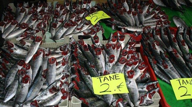 Palamutun tane fiyatı balıkçı tezgahlarında 2 liraya kadar düştü.
