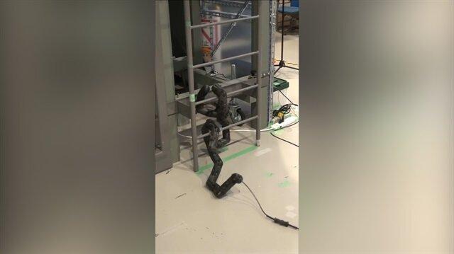 Merdivenleri tırmanan yılan robot