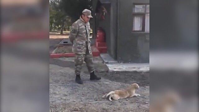 Komutanın emriyle sürünen sevimli köpek kahkahaya boğdu