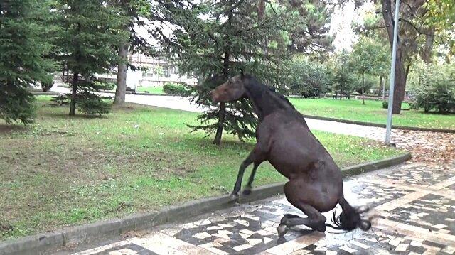 Çocuk parkına terk edilen at çırpınarak can verdi