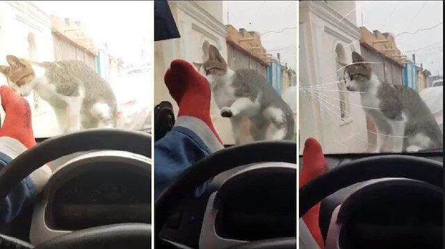 Kediyi korkutmak isterken arabasından oldu